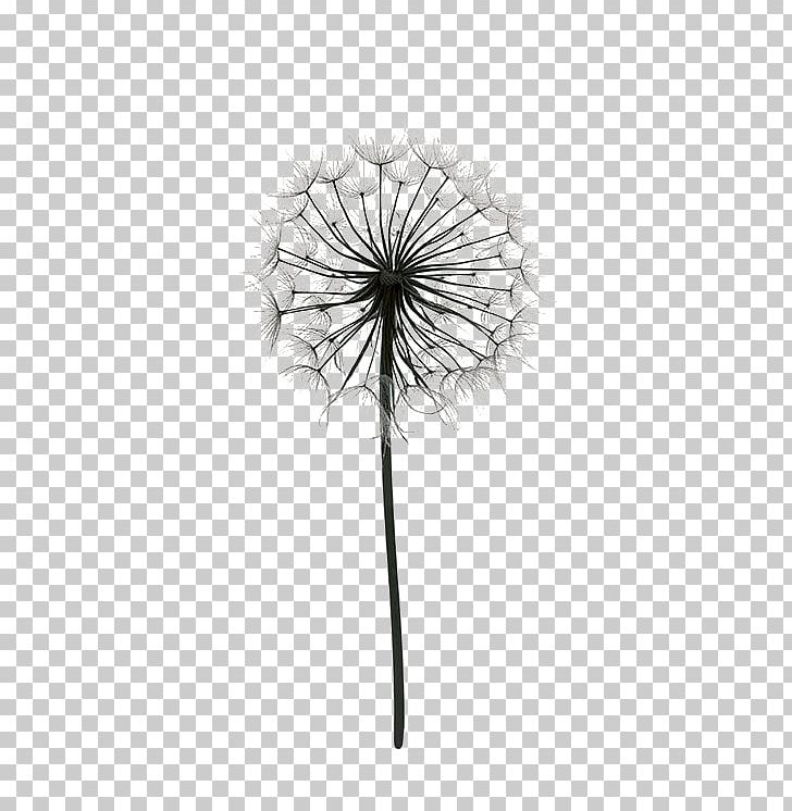 Paper Drawing Poster Dandelion Black And White PNG, Clipart, Balloon.