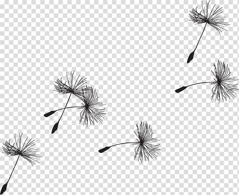 Black dandelion , Seed Common Dandelion , bird watercolor.