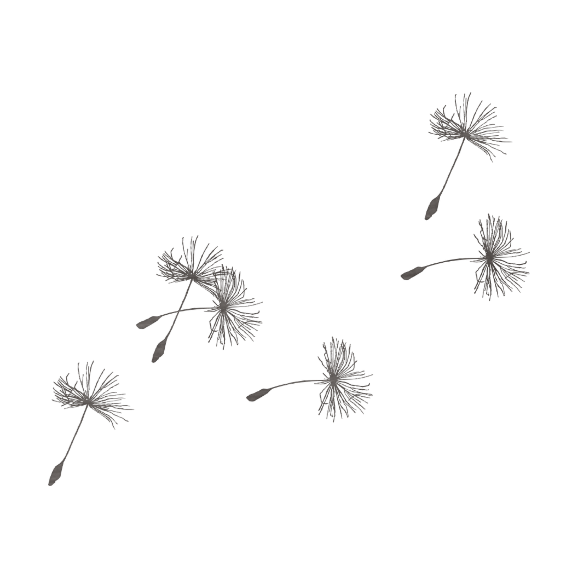 Dandelion Blowing In The Wind Drawing at PaintingValley.com.
