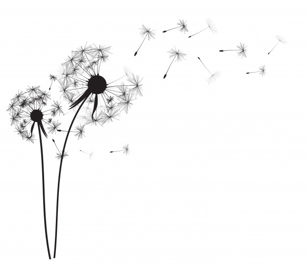 Dandelion Vectors, Photos and PSD files.