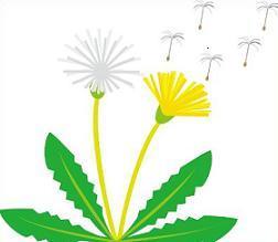 Free Dandelion Clipart.