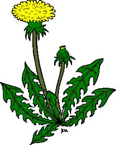 Dandelion clip art pictures.
