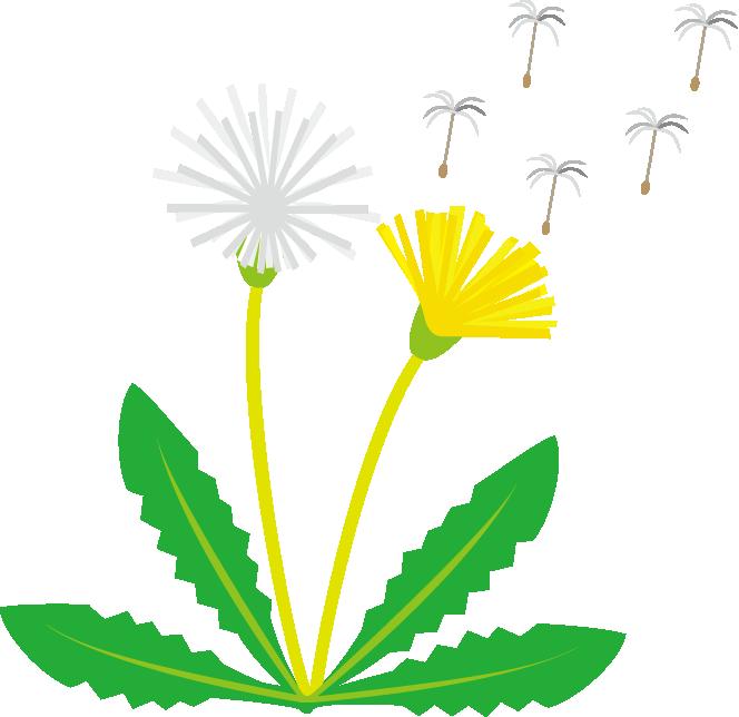 Dandelion Clipart.