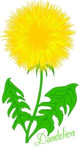 Dandelion Flower Clipart.
