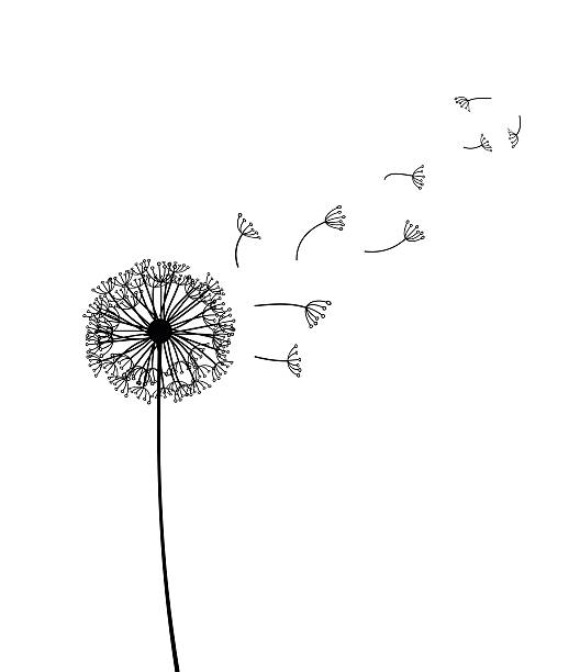 Dandelion Clipart Black And White (104+ images in Collection) Page 3.