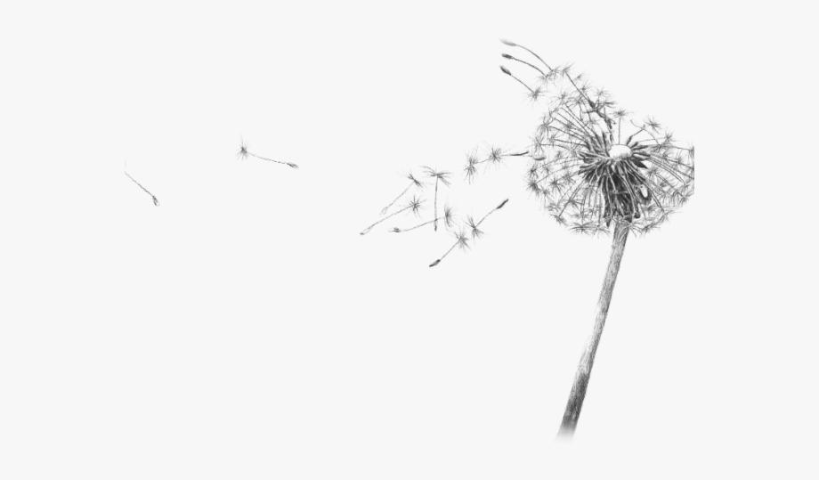 Dandelion Clipart Gif Transparent.