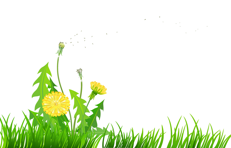 Free Dandelion Cliparts, Download Free Clip Art, Free Clip.