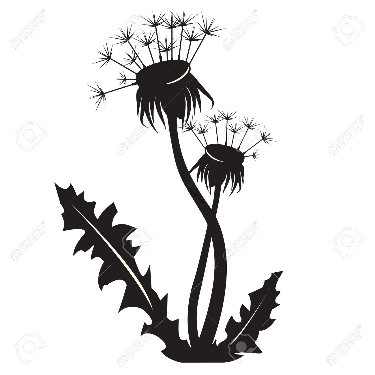 Dandelion clipart black and white background.