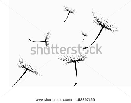 Dandelion Seed Stock Photos, Royalty.