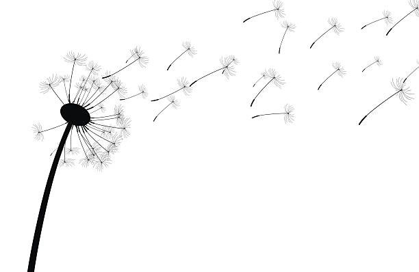 Top 30 Dandelion Clip Art, Vector Graphics and Illustrations.