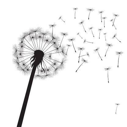 Black dandelions and graphic element. Vector Illustration.