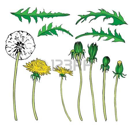 33,116 Wild Flower Stock Vector Illustration And Royalty Free Wild.