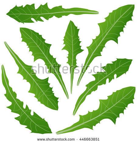Dandelion Leaf Stock Vectors, Images & Vector Art.