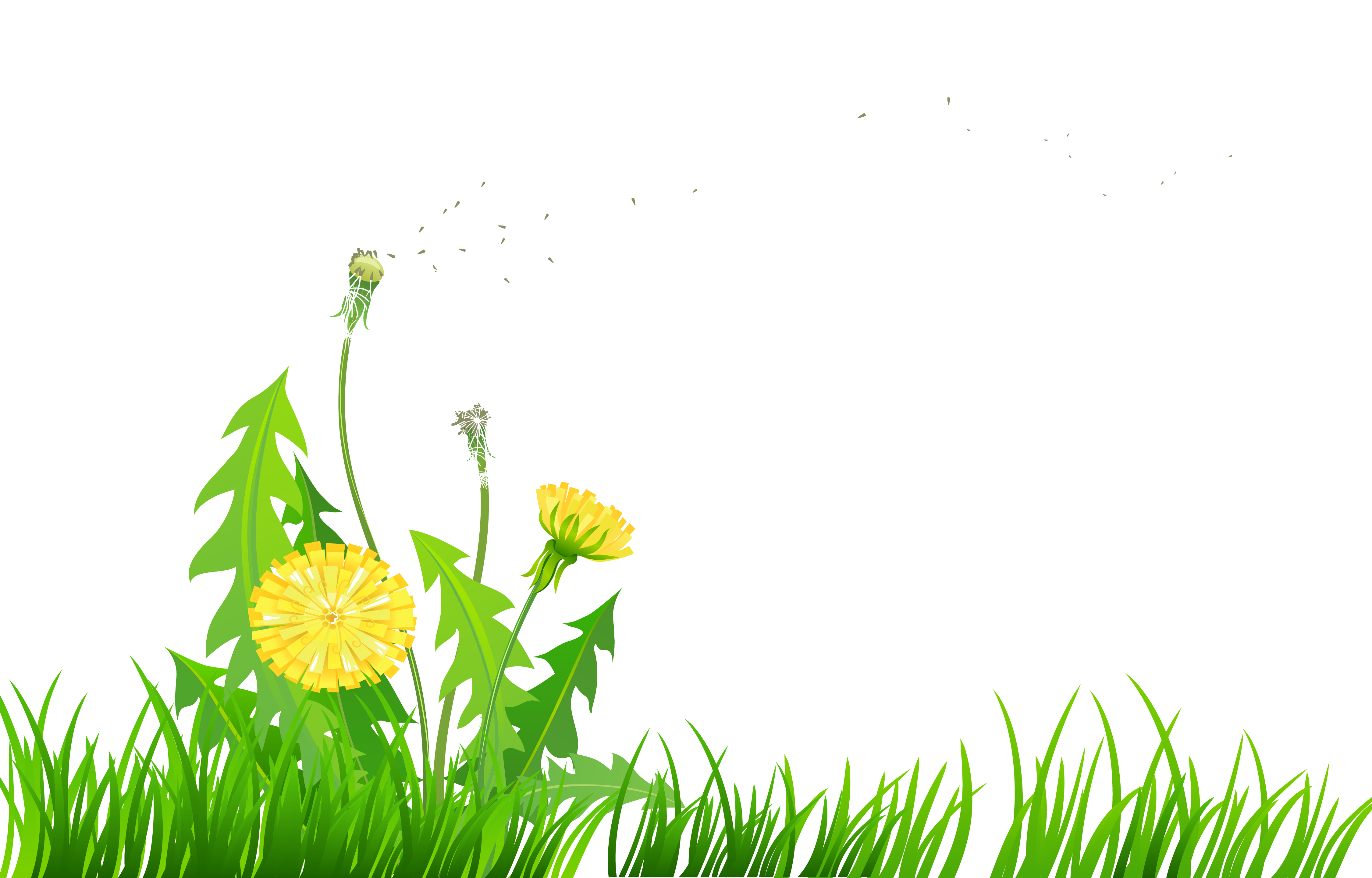 Dandelion Meadow Clipart Clipground
