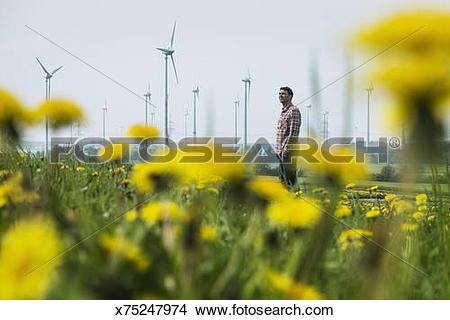 Stock Photo of Man in dandelion meadow, windmill park x75247974.