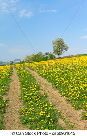 Stock Images of Path in dandelion meadow in the spring csp8961845.