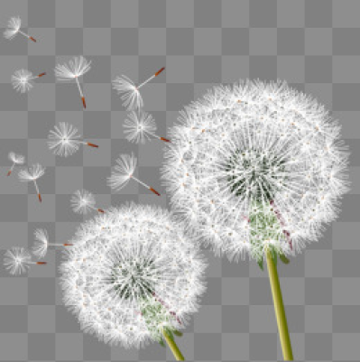 Download Free png Dandelion PNG Images, Download 1,453 PNG Resources.