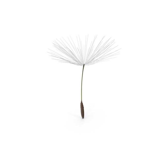 Dandelion Seed PNG Images & PSDs for Download.