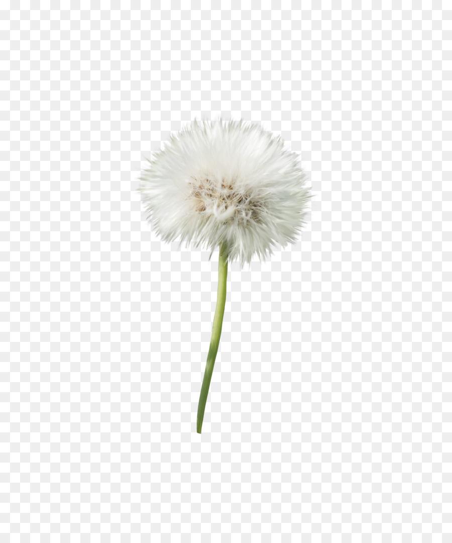 Flower Stem png download.