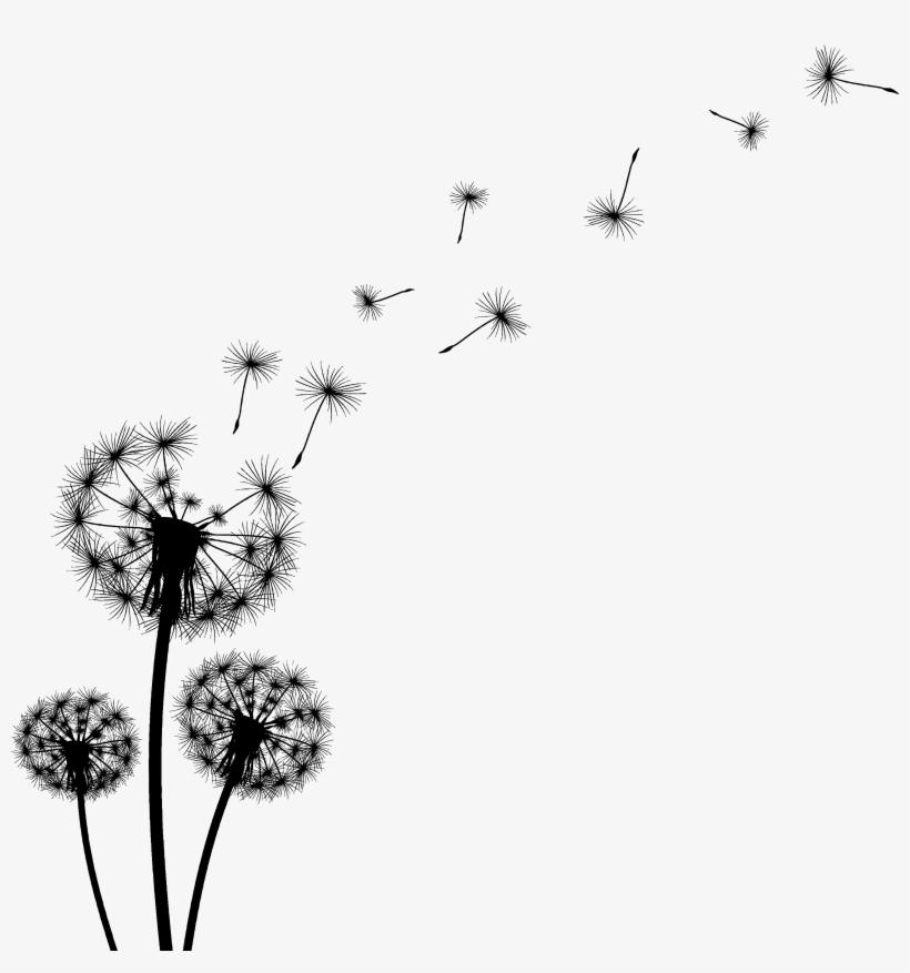 Dandelion Black And White Clipart.