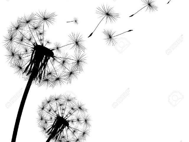 Free Dandelion Clipart, Download Free Clip Art on Owips.com.