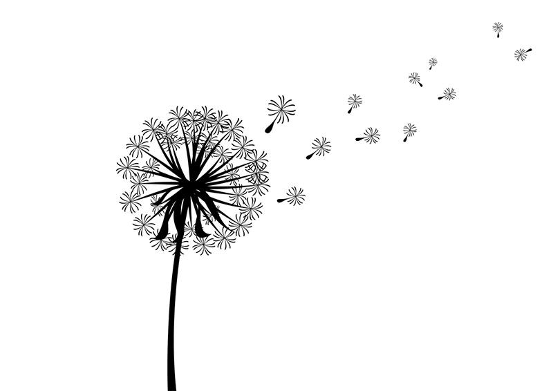 Clip art Image Vector graphics Dandelion coffee.