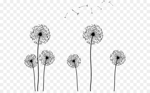 Seed Clip art.
