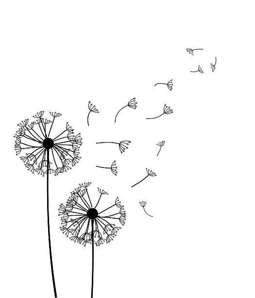 Top Dandelion Clip Art, Vector Graphics and Illustrations.