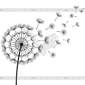 Black fluff dandelion.