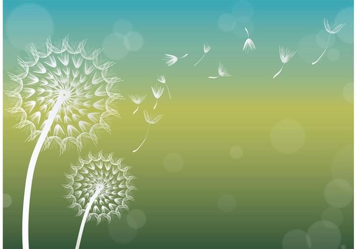 Dandelion Vector Background.