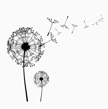 Dandelion vector clipart.