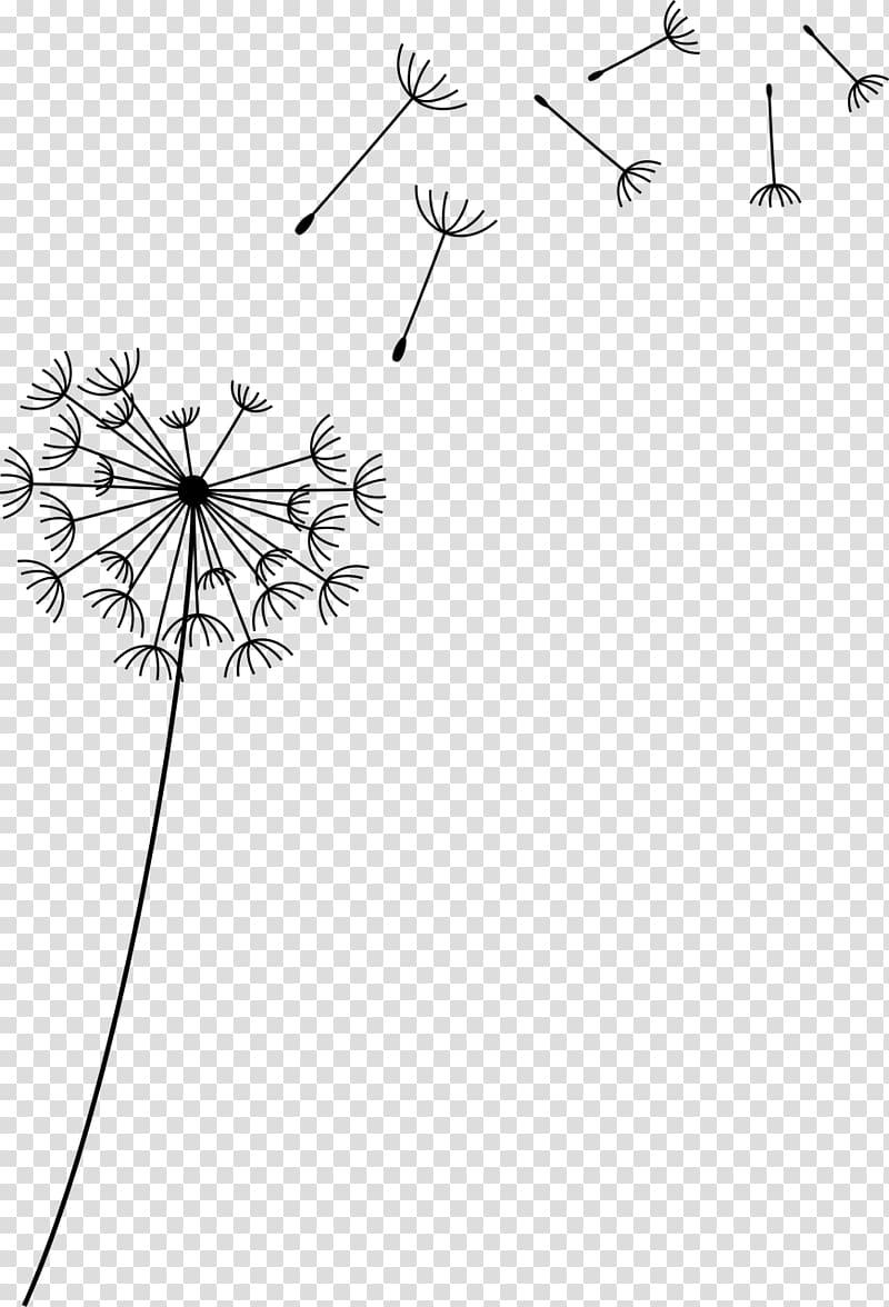 Flower Common Dandelion , flower transparent background PNG.