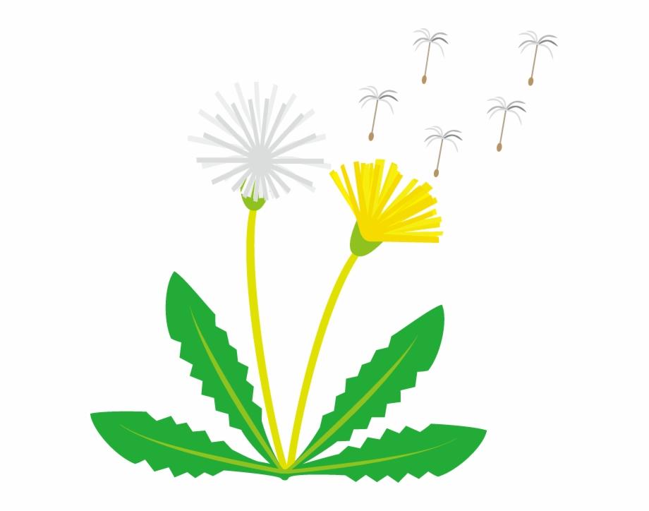 Free Dandelions Png, Download Free Clip Art, Free Clip Art.
