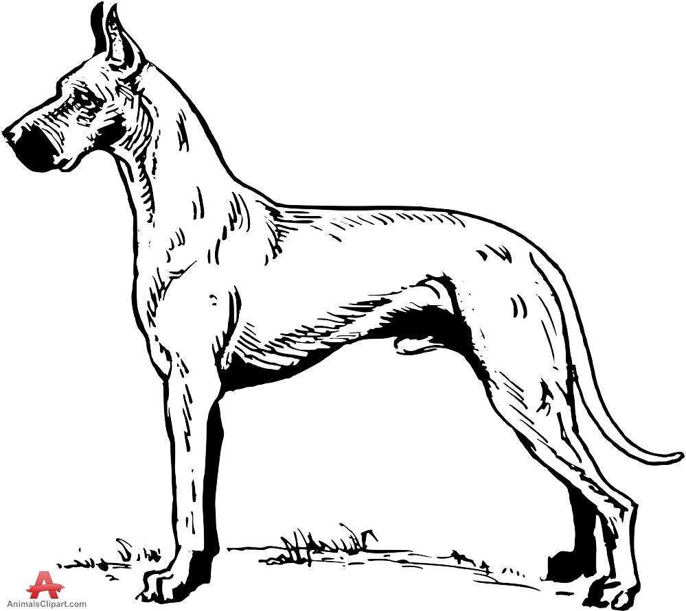 Great Dane Drawing Clipart.