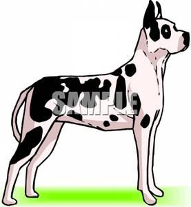Dane Dog.