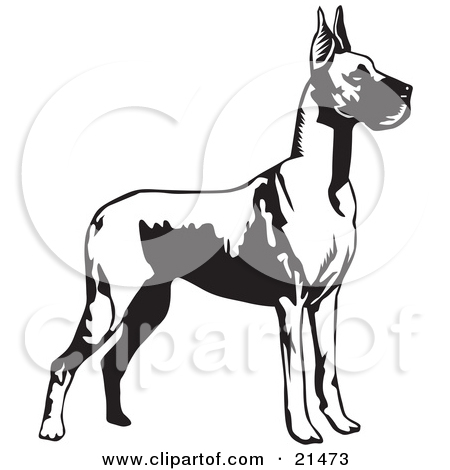 Clipart Illustration of a Great Dane Dog With Cropped Ears.