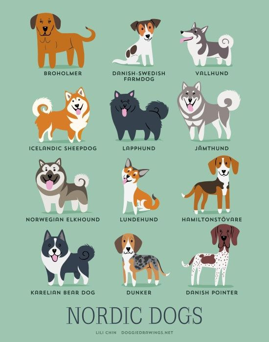 Dogs Of The World By Geographic Origin // Lili Chin.