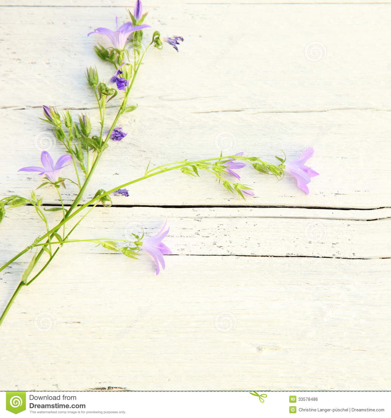 Delicate Summer Floral Background Royalty Free Stock Image.