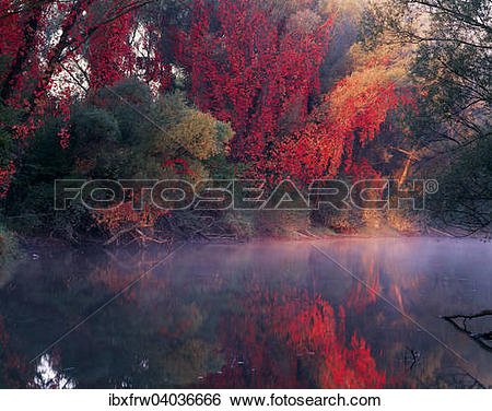 """Stock Images of """"Autumn mood with wild vine, autumn colors, Danube."""
