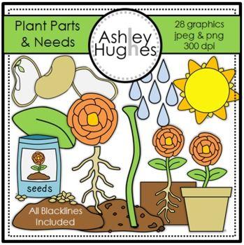 Plant Parts & Needs Clipart {A Hughes Design}.