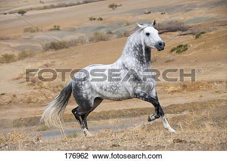 Stock Photo of Arab.