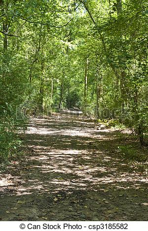 Stock Photo of Woodland Trail Through Sun Dappled Forest.