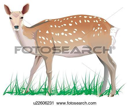 Clipart of Dappled deer on grass, portrait u22606231.