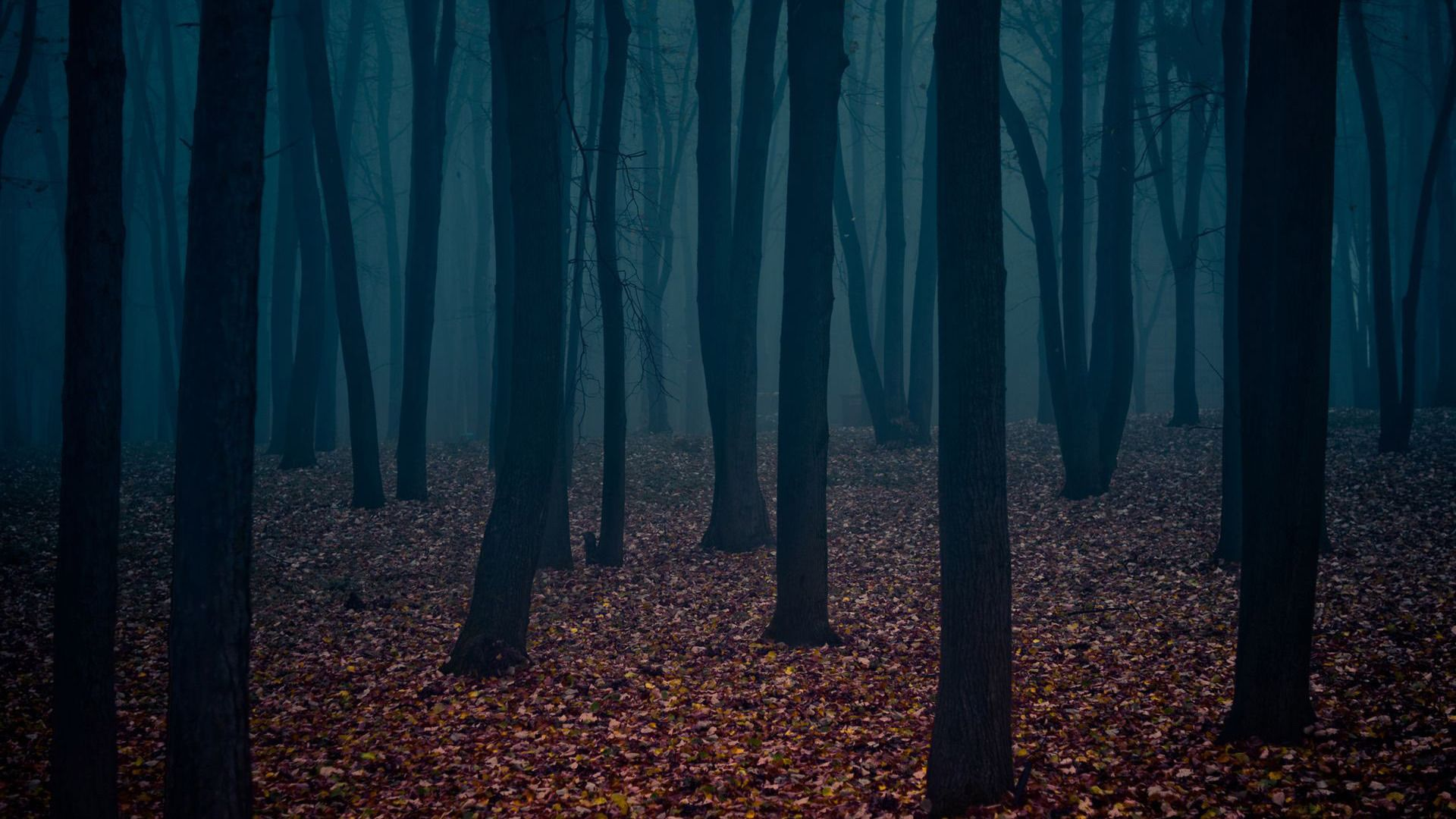 Dark forest clipart backgrounds.