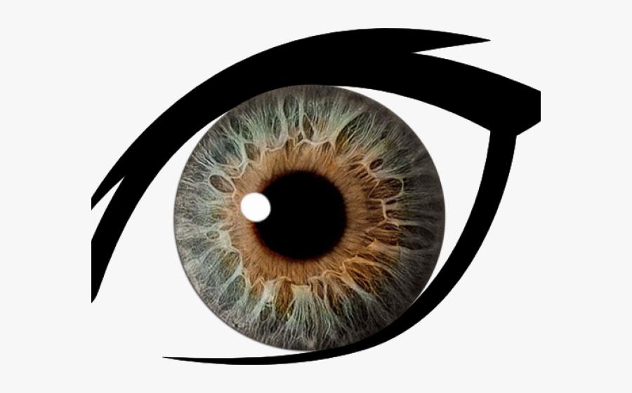 Hazel Eyes Clipart Dark Brown Eye.