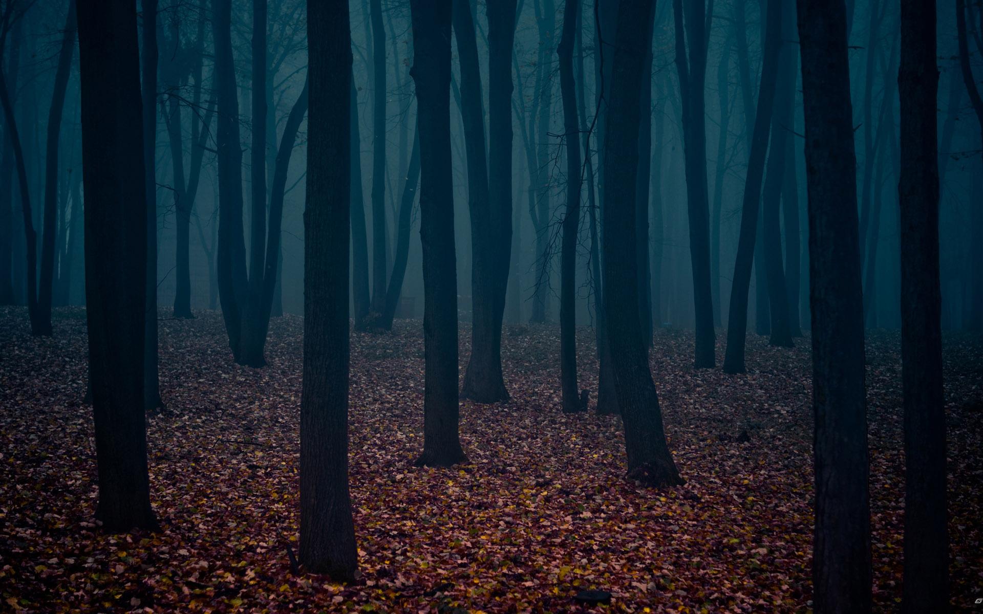 Clipart dark forest.