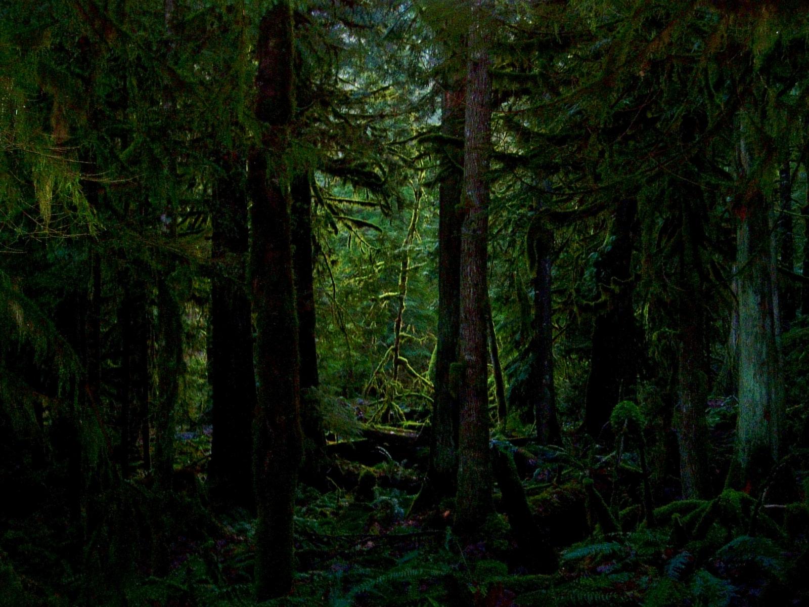 Dark forest clipart