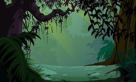 Dark Forest View Stock Photo.
