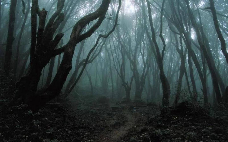 Dark forest clipart 1920x1080.