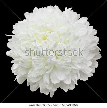 Jane McIlroy's Portfolio on Shutterstock.